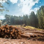 Timber skyscrapers – Viable Solution to Climate Change or Utopia?